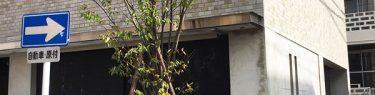 シンボルツリー|欅|ケヤキ